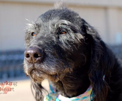 Walnut – Sex: Male Age: 9 years old