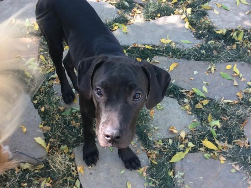 Rescue Adoption Dogs Toronto