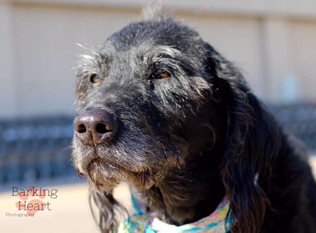 Senior Dogs For Adoption Colorado