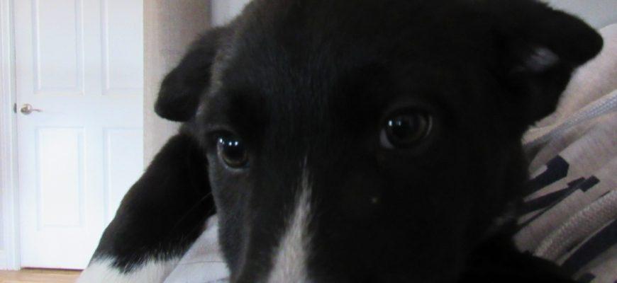 Winterhorn – Sex: M Age: puppy