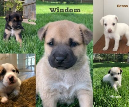 14er litter Age: puppies