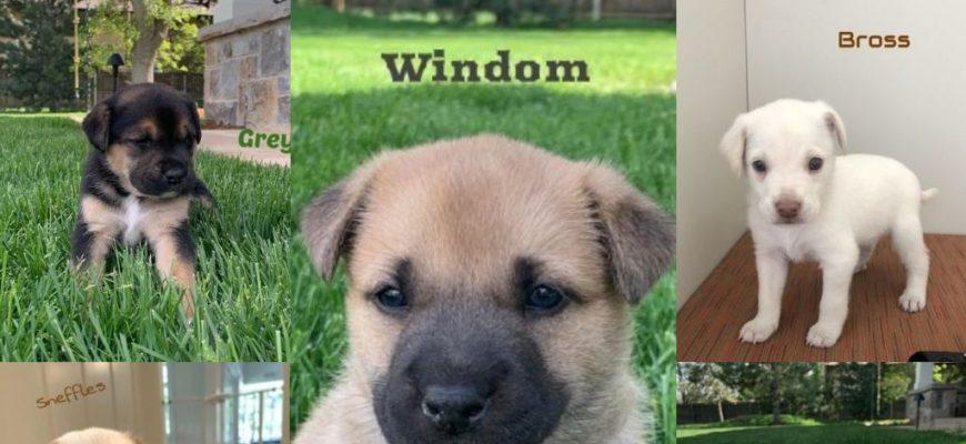14er litter Age: puppies