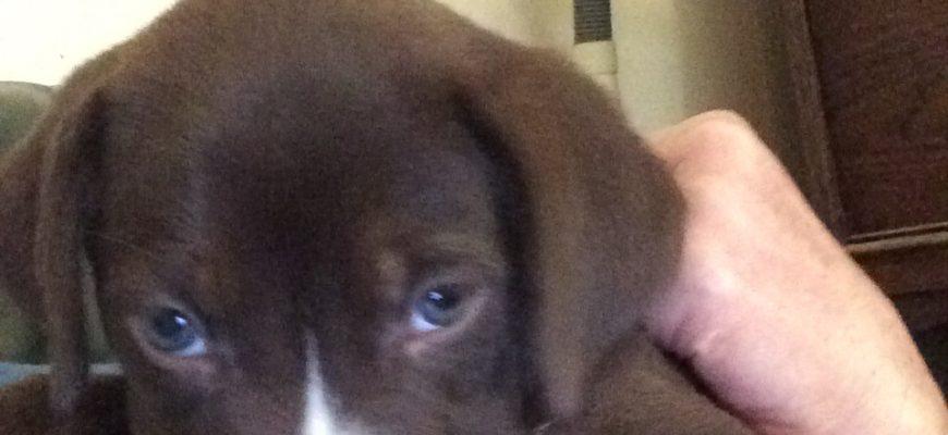 Devotion Puppy