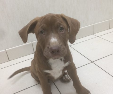 Loyalty Sex: M Age: puppy