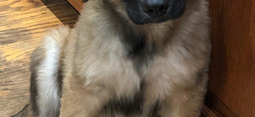 Mr Pibb Sex: M Age: pup