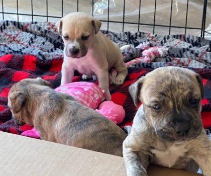 Pixar Puppies!