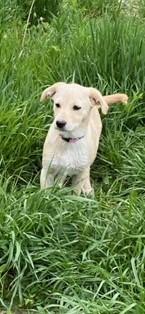 Incognito Age: puppy Gender: F