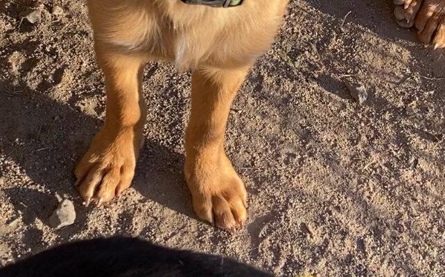 Hush Hush Age: Puppy Gender: F