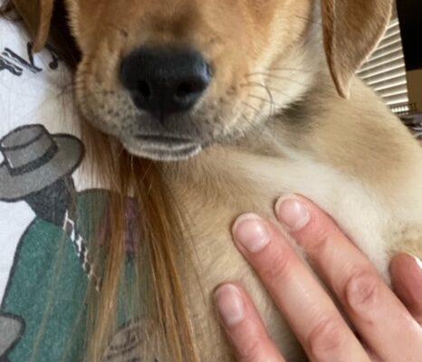 Slide Age: Puppy Gender: M