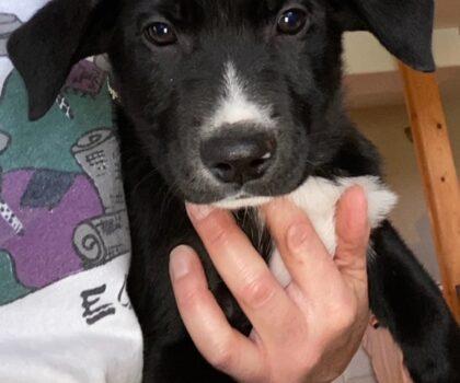 Huatulco Gender: M Age: puppy