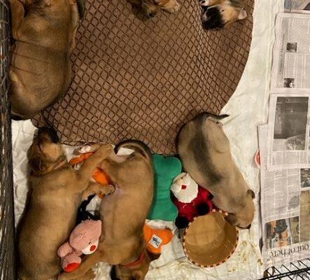 Kindergarten litter Age: Puppies