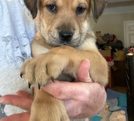 Alphabet Age: Puppy Gender: F