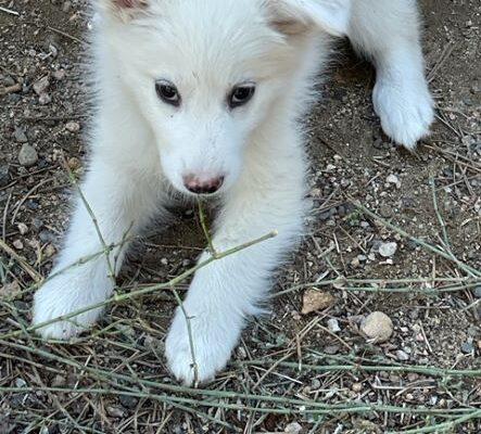 Sweetness Age: Pup Gender: F